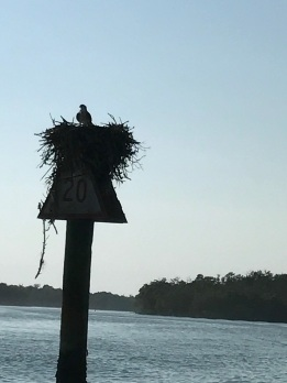 Most of the channel markers were home to very large nests